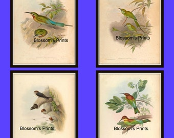 Set of four bird prints from the 1800's Plates 41,42,43, and 44