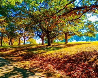 Autumn View, Autumn, Trees, Wall Art, Art Photography, Nature, Arkansas, Country, Color
