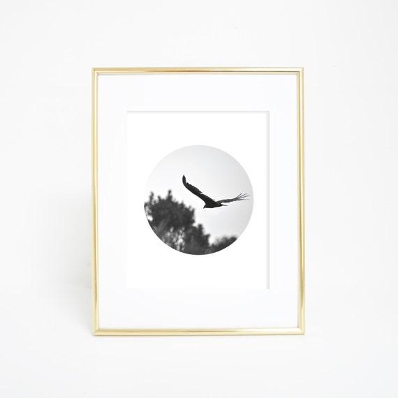 Circle Print, Bird Photography, Black & White Photography, Wall Decor, Digital Print, Bird Art, Bird Print, Circle Art, Photography Print