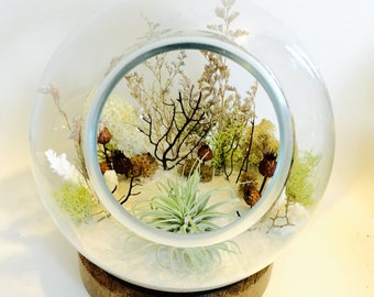 Air plant terrarium// zen garden