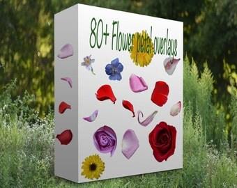 Flower petal overlays PNG digital files