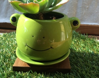 """Frog planter only no plant animal planter /gift for men / gift for kids / party favor measure: 2.5 wide 3"""""""