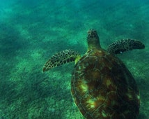 SEA TURTLE, CARIBBEAN, Sea Ocean Underwater, nautical 8 x 10 picture, Caribbean ocean photo, Fine Art gift, home decor, turtlesandpeace