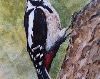 LIMITED EDITION Giclee PRINT Great Spotted Woodpecker from original Watercolour Painting.