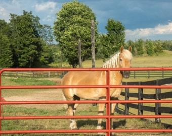 Horse #2 Black Star Farms Winery in Traverse City, Michigan Photo 11x14