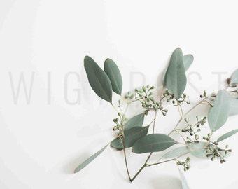 Eucalyptus  | Wedding Inspired Styled Stock Photo/ Information Mockup for Blogs, Websites & Social Media