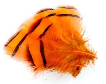 2-3 Inch Orange Lady Amherst Feathers (10) Reddish Brown Pheasant Feathers. Orange Feathers. Orange Bird Feathers. Black Barred Feathers