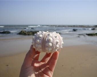 "Light Purple 2.5""-3"" Sea Urchin - Sputnik Sea Urchins -Crafting Shells-Beach Decor - Sea urchin- Natural Decor-Seashell Decor Gift"