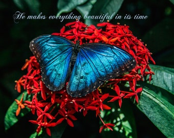 Trave, Nature, Inspiration, Religion, Butterfly 8x10