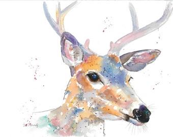 Young Buck - Contemporary colourful A3 Giclee Watercolour print from an original watercolour by Karen Thomas
