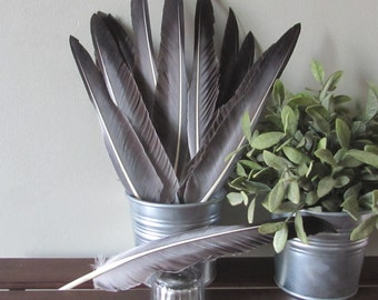 Grey Wild Turkey Feathers