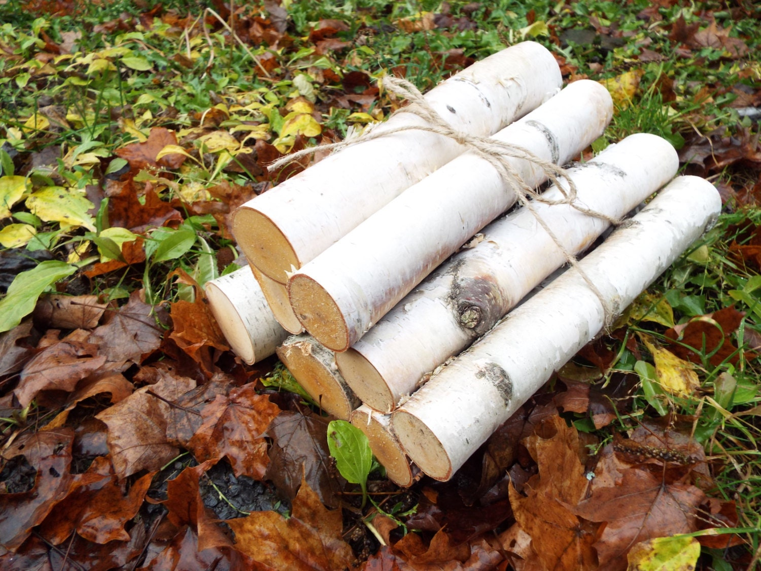 8 Logs 12 Vermont White Birch Logs For By Makingscentsorganic