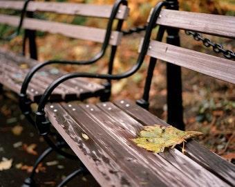 WSP Autumn