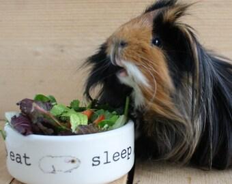 Guinea Pig Pet Food Bowl - Eat Sleep Poo Repeat Design