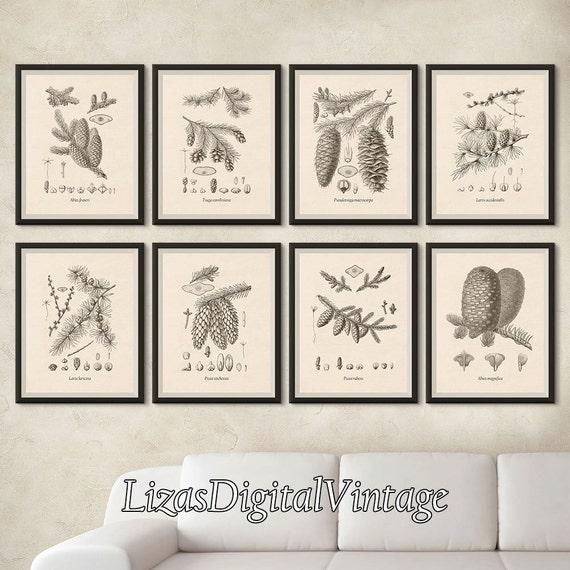 Set of 8 tree prints, Vintage botanical print set, Print set, Tree art, Tree print, Conifers, Printable art, Botanical, 8x10, 11x14, A3, JPG