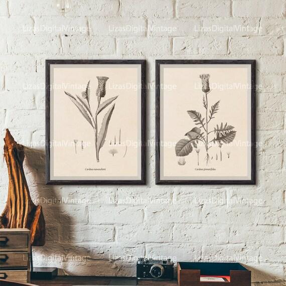 Botanical print set, Printable set, Set of 2 prints, Thistle print, Botanical art, Vintage botanical prints, Antique botanical print, JPG