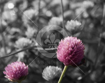 Clover Flower Fine Art Photography Print