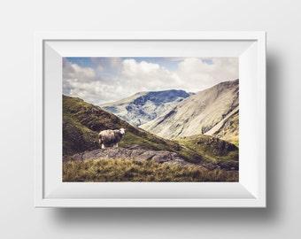 Lone Sheep - Lake District, UK - Photographic print - Scenic landscape photography wall art