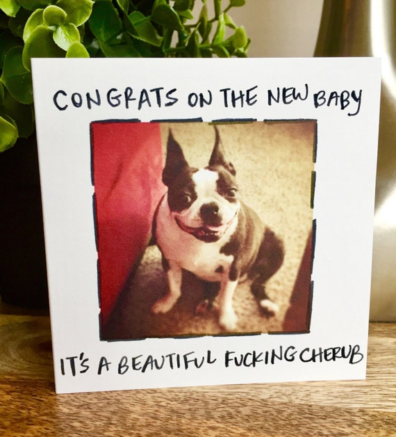 Congratulations funny dog - photo#42