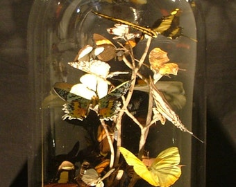 Butterfly Dome Terrarium, Entomology Display, Multiple Species