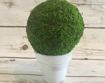 Moss Topiary Ball in rustic pot