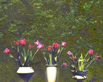 Sunny Day Tulips
