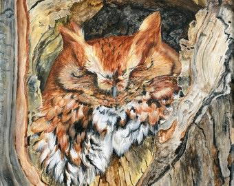 "Screech Owl Original Acrylic Painting on canvas ""Woodland Screech"" by Teresa Thompson, owl painting, owl art, screech owl art, screech owl"