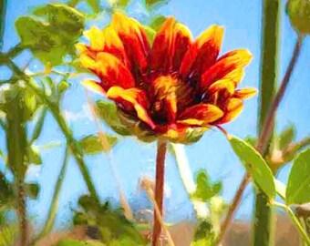 Artistic rendition of an Arizona Wild Flower