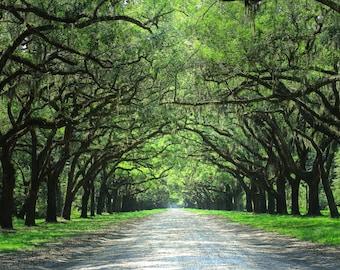 Wormsloe Plantation, Forest Gump, Savannah, Georgia, Live Oaks, GA, Historic