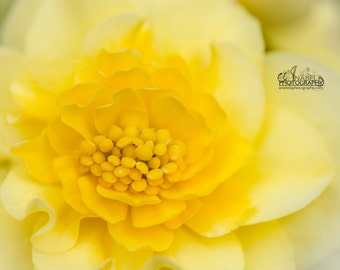 Colour Print, Fine Art Photography , Yellow Floral
