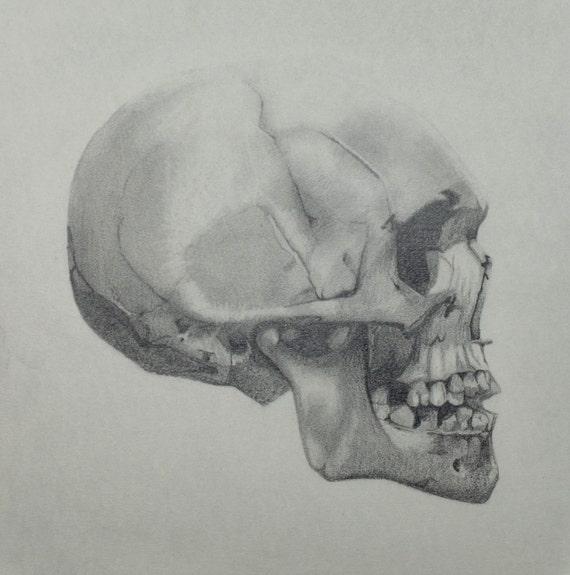 skull side view original graphite drawing 9 5x9 5. Black Bedroom Furniture Sets. Home Design Ideas