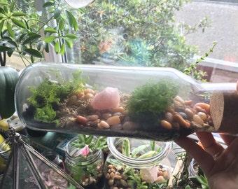 Moss Terrarium with Rose Quartz