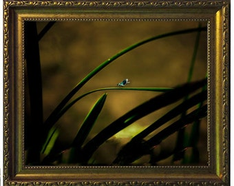 Shabby Chic, A4 framed photograph,  Gold frame, Home Decor, Photography, Art, Nature