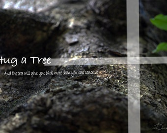 Hug a Tree - and the tree will give you back more then you can conceive