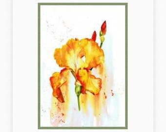 Iris painting, Print from my Original watercolour flower painting, botanical picture, orange wall art, orange Iris watercolor, Bearded Iris