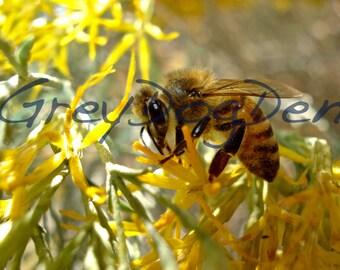 Yellow Honey Bee Fine Art Photo