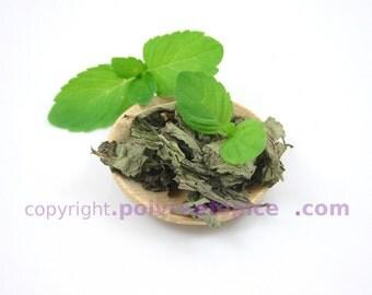 MINT leaf - leaf MINT