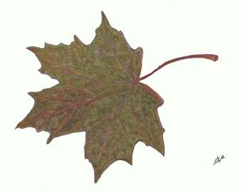 "Norway Maple Leaf Print 5"" x 7"" Autumn Home Decor"