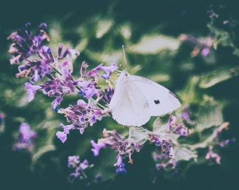 Nature photography print, flower photography, butterfly photography, nature decor