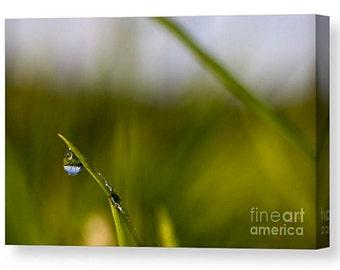 Canvas print of dew drop grass winter wet nature bokeh natural droplet macro close nature vibrant blade bubble field meadow