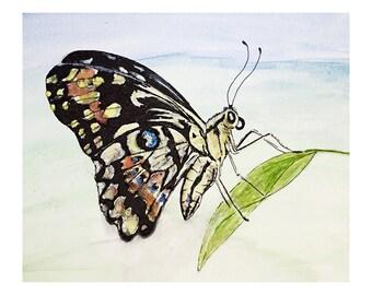 Watercolour & Ink - Flutterfly