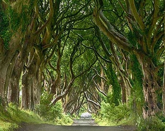 The Dark Hedge Northern Ireland Photograph
