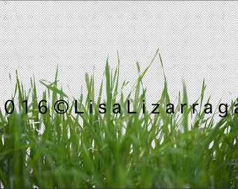 Grass - Digital PSD File on Transparency