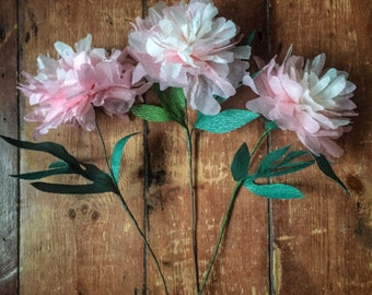 3 Tissue and Crepe Paper Peonies