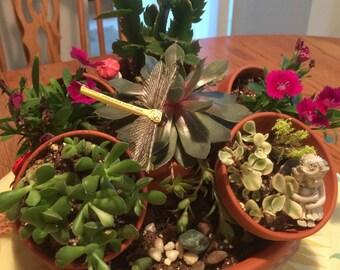 Terra-cotta Succulent Planter