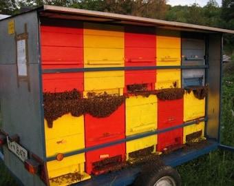 Beekeeping Equipment National Slovenian AZ beehive