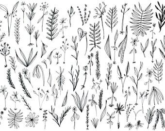 Wild Plants Print