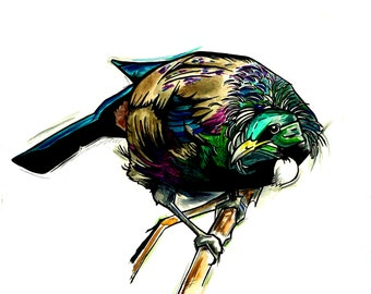 Tui Watercolour and Ink Illustration Print