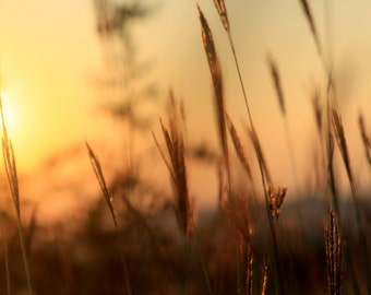 Sunset grass silhouette 2