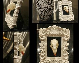 Real bird skull mini vintage frame